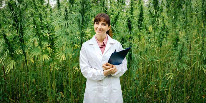 Colleges-Preparing-Students-for-Cannabis-Job-Market