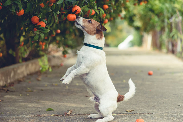 Dog-eating-Low-Hanging-fruit Cannabis News Concept